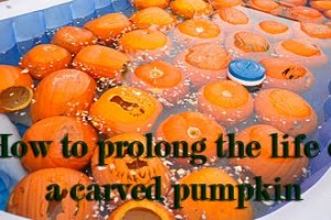 How to prolong the life of your carved pumpkin copy