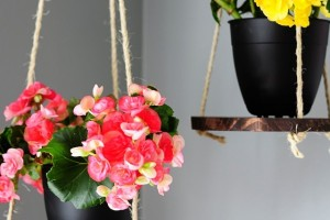 Sprucing up for Spring: DIY Plant Hanger