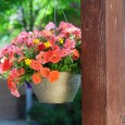 Hanging Coral Flower Pots (1 of 7)