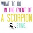 what to do in the event of a scorpion sting