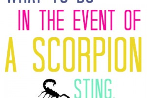 What to do in the Event of a Scorpion Bite.