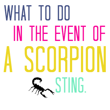 what-to-do-in-the-event-of-a-scorpion-sting