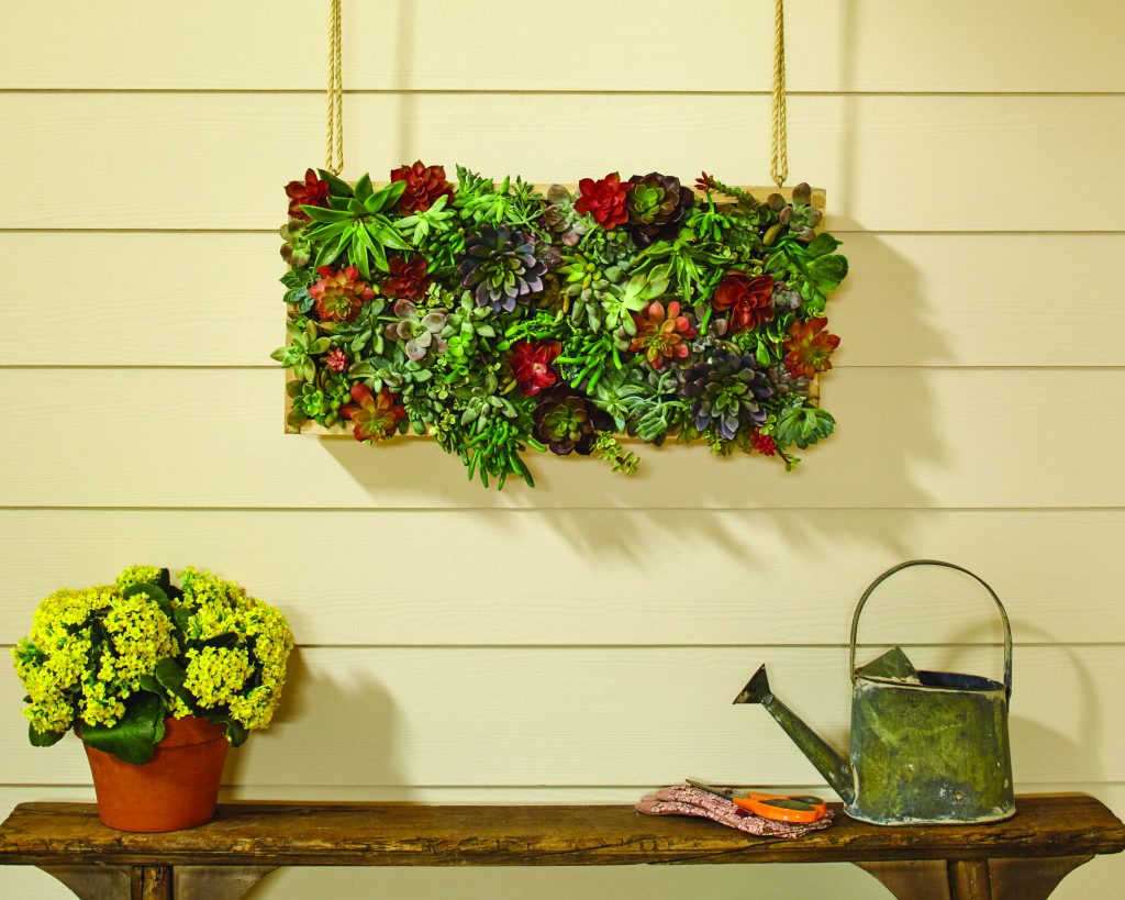 Hanging Succulent Garden | All Things Thrifty